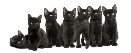 Black-Kittens
