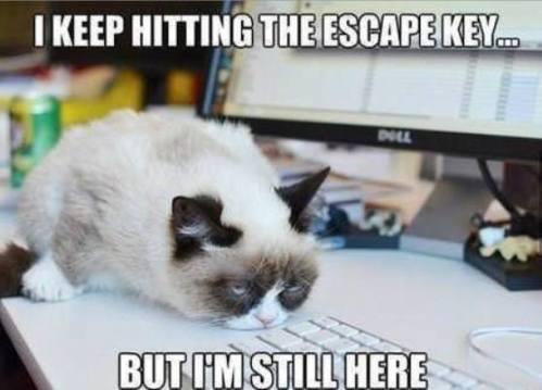 Grumpy_Cat_016