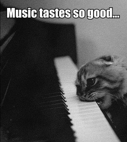 piano-cat